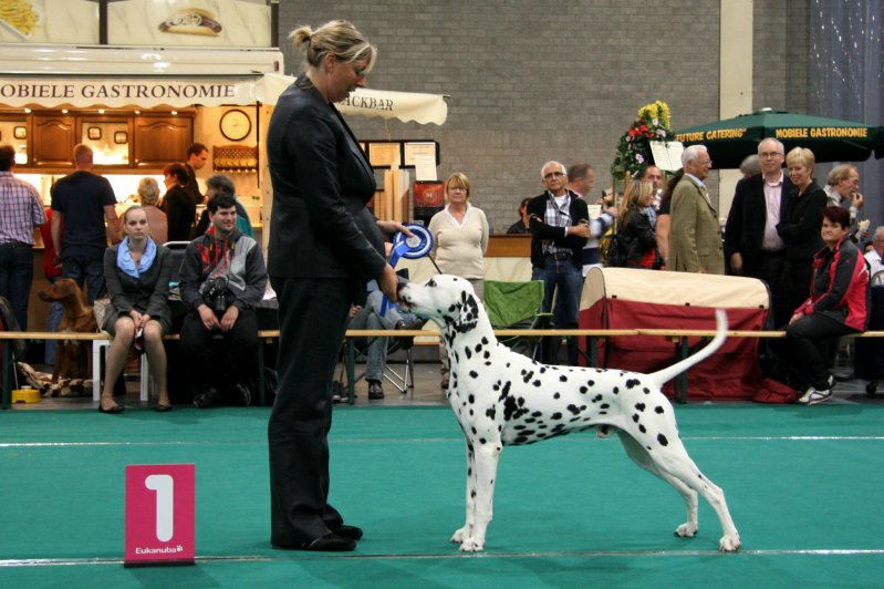 Solbo's Kayo BOB and BIG-2 at int. show Maastricht 2012