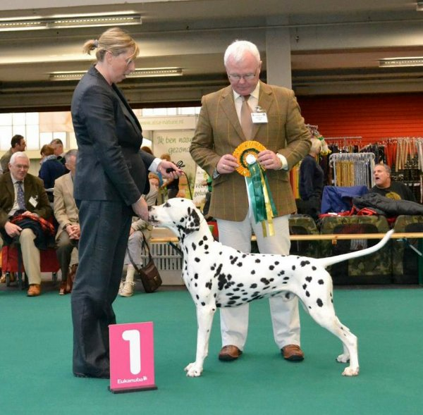 Solbo's Kayo Best of Breed and Winner 2012