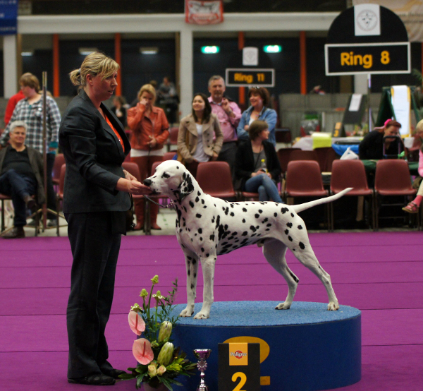 Solbo's Kayo Best of Breed and BIG-2 in Arnhem 2013