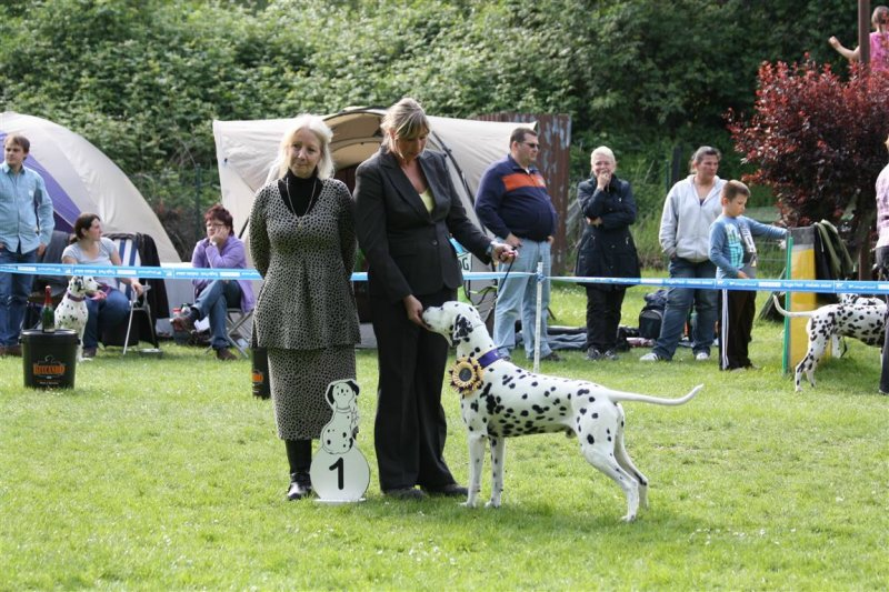 Solbo's Kayo Best of Breed in Bochum 2014