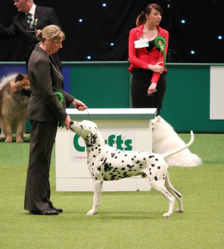 Solbo's Kayo Crufts 2014 Best of Breed