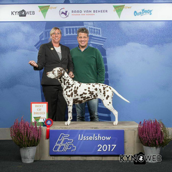 Lara Best of Breed Zwolle 2017